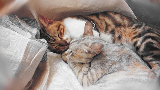 přitulené kočky.jpg