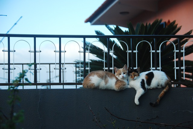 kočky u zábradlí.jpg